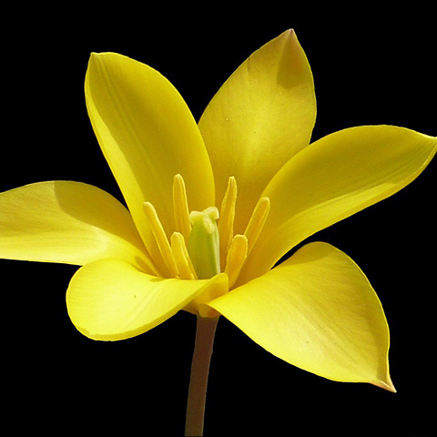 大きな「花アイコン」 写真アイコン