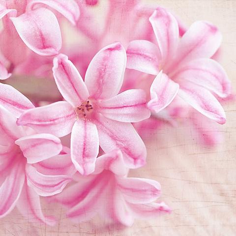 アイコン オシャレな花写真 可愛い花